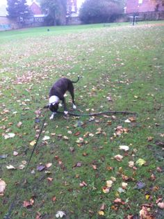 Stella and his twig…..