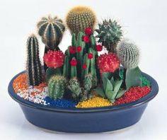 Cute cactus dish garden [L] Succulent Arrangements, Cacti And Succulents, Planting Succulents, Cactus Plants, Small Cactus, Cactus Flower, Flower Pots, Flowers, Cactus Terrarium