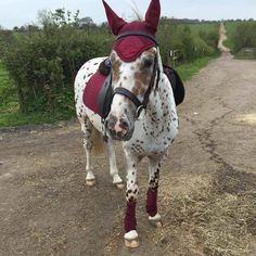 """It's the question most asked across equestrian internet forums all over the world, but is there a definitive answer to """"what colour looks best on my horse? Equestrian Outfits, Equestrian Style, Equestrian Fashion, Pretty Horses, Beautiful Horses, What Colours Suit Me, English Horse Tack, English Saddle, Horse Riding Clothes"""