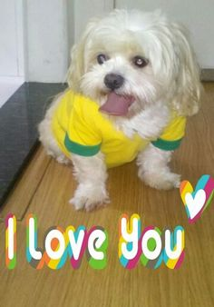 Minha linda Susi♥