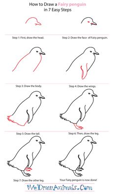 how to draw a penguin to draw penguins and how to draw