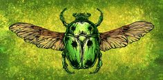 The Scarab Beetle by David Lozeau Insect Illustration Canvas Art Print