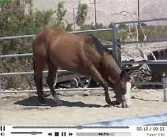 Is Your Horse Sleep Deprived? Watch These Videos to Learn More.