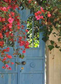 ♔ Summer in Provence