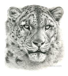 Snow Leopard by =sschukina on deviantART