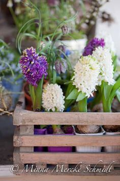 Våriga hyacinter | blomsterverkstad | Sköna Hem