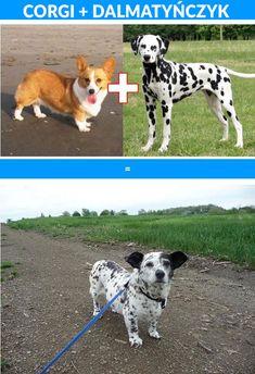 10 krzyz�wek popularnych ras ps�w | PENSE.PL
