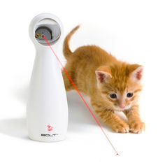 Pretty sure this would drive a Boxer stark raving mad.......PetSafe: Bolt Automatic Laser Toy, $18