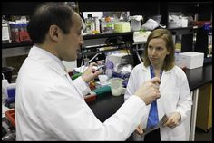 Harvard stem cell researchers find protein that rejuvenates aging mouse hearts. By Carolyn Y. Johnson, Boston Globe Staff