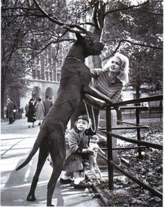 great danes rule. Want one so bad!!!