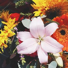 Friday flowers for fun  (see what I did there? A little alliteration for you) #tgif