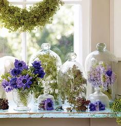 Violet anemone, hyacinth, eucalyptus & green berries under bell jars.
