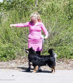 """Finnish Lapphund, """"Tutu,"""" Peikkovuoren Veni with Leeza Friedman-Prokopishyn. Photo by Nicole Prokopishyn. Tutu, Animals, Animales, Animaux, Tutus, Animal, Animais"""