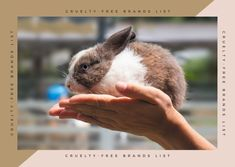 Cruelty-Free Brands List (updated 2021) - Kabuki Rune Cute Bunny, Bunny Rabbit, Dwarf Bunnies, Dwarf Rabbit, Netherland Dwarf, House Rabbit, Cruelty Free Makeup, Animals, Socrates