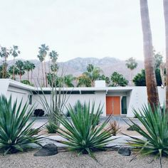 Easy Desert Landscaping Tips That Will Help You Design A Beautiful Yard Palm Springs Häuser, Palm Springs Style, Mid Century Landscaping, Modern Landscaping, Exterior Design, Interior And Exterior, Palm Springs Mid Century Modern, Mid Century Exterior, Desert Homes