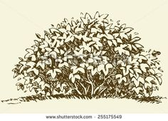 how to draw realistic bushes - Ecosia Bush Drawing, Plant Drawing, Bushes And Shrubs, Realistic Eye Drawing, Tree Sketches, Ink Illustrations, Drawing Techniques, Tree Art, Ink Art