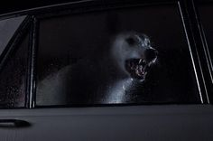 The Silence of Dogs in Cars…