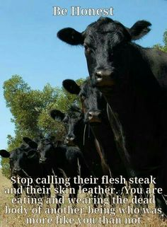 """Simply reducing your nonvegan habits isn't good enough. Question what you've been taught about human domination over all other species and our assumed """"rights"""" over the bodies and lives of nonhuman individuals. Learn reverence for life. Live vegan. www.vegankit.com and freefromharm.org"""