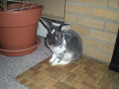 my little bunny boo Rabbit, Bunny, Rock, Animals, Rabbits, Cute Bunny, Animales, Animaux, Bunnies