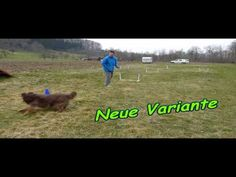 NADAC Hoopers-Agility: Training Richtungswechsel - YouTube