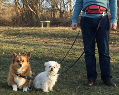 Tired of walking one-handed? Worried about losing hold of a hand leash? How about an easy, natural, run in the park with your dog? A hands-free lead allows you to leverage your body weight for better