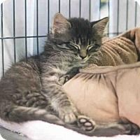 Adopt One of these Great Cats ! Norfolk, Adoption, Cats, Animals, Gatos, Animais, Animales, Kitty Cats, Animaux