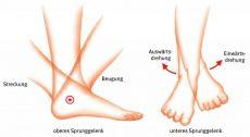 Sprunggelenk das verbindende Gelenk zwischen den Knochen des Unterschenkels und dem Fuß, das sich aus dem oberen und unteren Sprunggelenk zusammensetzt; das untere wird weiter unterteilt in einen vorderen und einen hinteren Gelenkabschnitt.