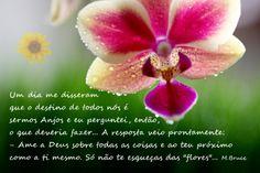 www.facebook.com/quandoeumudo.omundosetransforma.sempre
