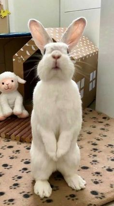 Rabbit Run, House Rabbit, Bunny Rabbit, Cute Wild Animals, Animals And Pets, Baby Animals, Baby Bunnies, Cute Bunny, Amor Animal