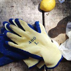 Learn to shuck oysters. | #lifelist