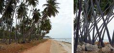 Equalogical Lab: Staccionate di Foglie di Palma in Sri Lanka