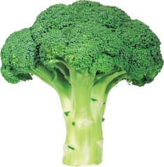 Broccoli PNG image with transparent background | ∇ 1750  : https://www.pinterest.com/lutdr/fotomateriaal-articulatie/