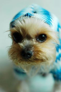 do you like my scarf?
