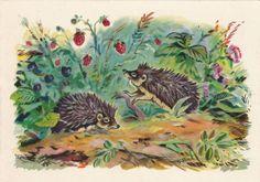 Vintage Frolov (-) Postcard - 1956, Izogiz