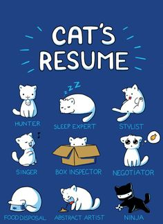 For cat lovers: A Cat's Resume! Crazy Cat Lady, Crazy Cats, I Love Cats, Cute Cats, Funny Kitties, Adorable Kittens, Kitten Baby, Photo Chat, All About Cats