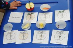 Parts of the apple - from Pinay Home Schooler