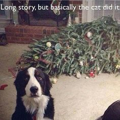 funny animals...she would so do this. But there is no cat to blame.
