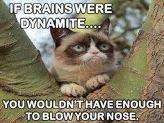 Oh snap! Grumpy Cat strikes again!