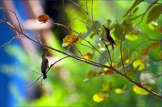 elegant nature photography - Google Search