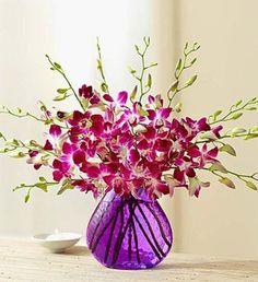 10 Exotic Breeze™ Orchids
