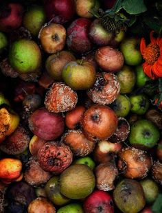Compost by Lena Koller Fruit Photography, Food Photography Styling, Stunning Photography, Food Styling, Rotten Fruit, Deep Autumn, Cookery Books, Food Waste, Kitchen Art