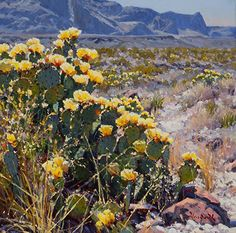 Cactus Gold by Mark Haworth Oil ~ 16 x 16