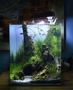 Stunning Aquarium Design Ideas For Indoor Decorations 45