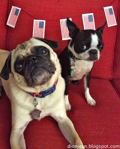 Does your dog get worried on the 4th of July? Ease the pain with a dog-friendly celebration! Here are some ideas.