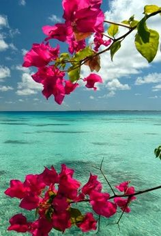 Fakarava,  French Polynesia - Oooohhhh to die for , almost unreal ...