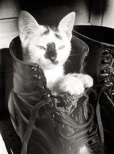 "The ORIGINAL ""Puss n' Boot"". Kitty in German Luftwaffe Fallschirmjäger (Paratrooper) boot. Crete. GREECE. 1943"