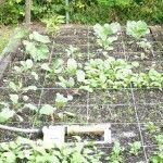 Square foot gardening tutorial