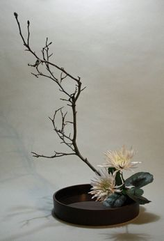 Moribana with white chrysanthemum and tulip magnolia