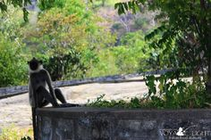 The wildlife at the top of the Golden Temple, Dambulla
