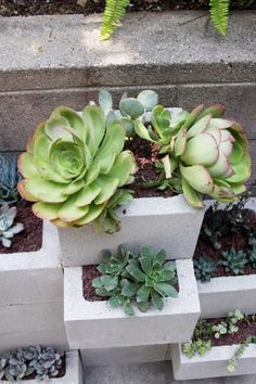 """planter - The wall was built with 12"""" cinder blocks (the kind you would use to build a column). Liquid nails to hold them together. In fact in order to make bottoms for the blocks that are sticking forward, we cut pieces of cinder block to fit the inside and then liquid nailed them in."""